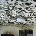 Mould Damp Mildew Odour